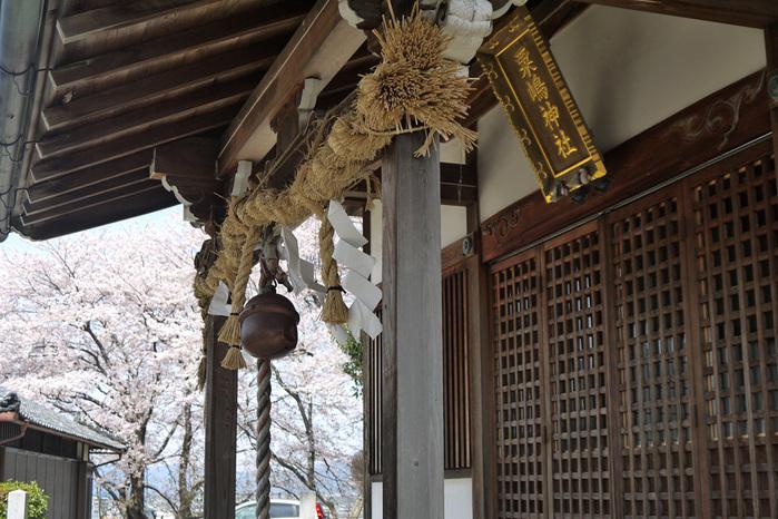 粟島神社(亀岡)の桜