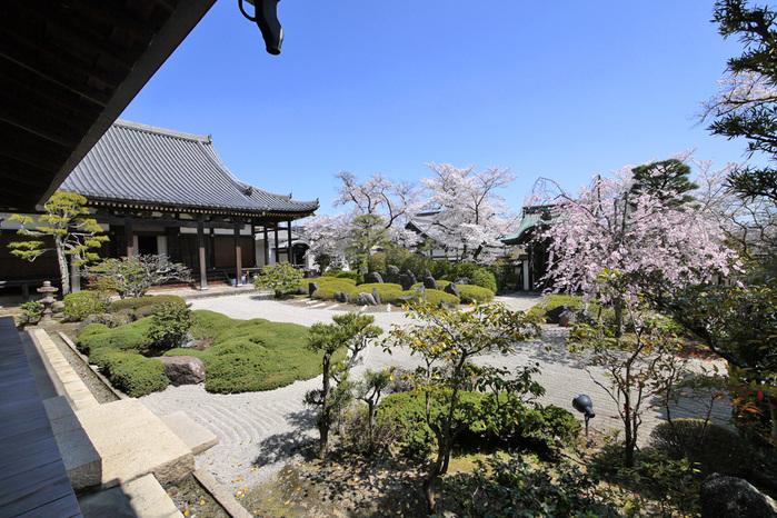 八幡市 正法寺の桜写真
