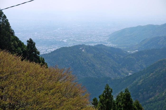 月輪寺の桜