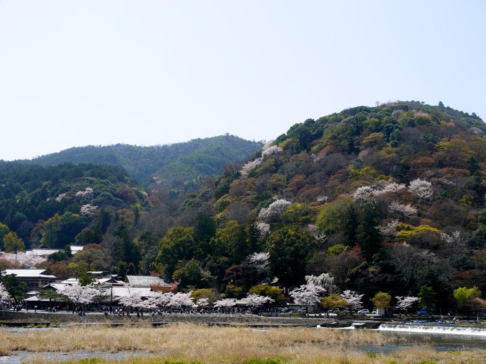 嵐山渡月橋の桜