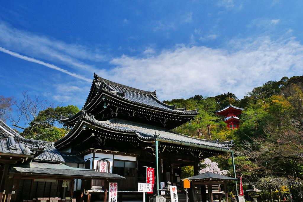 京都 今熊野観音寺 桜のフリー写真素材