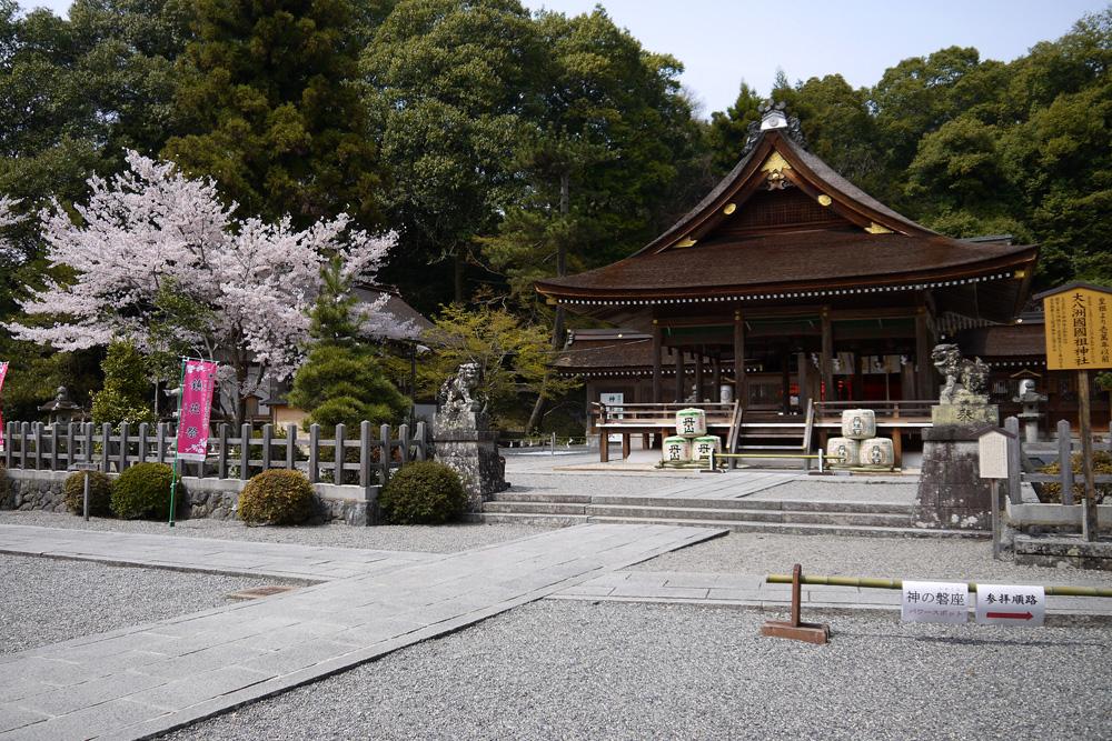 京都 出雲大神宮 桜