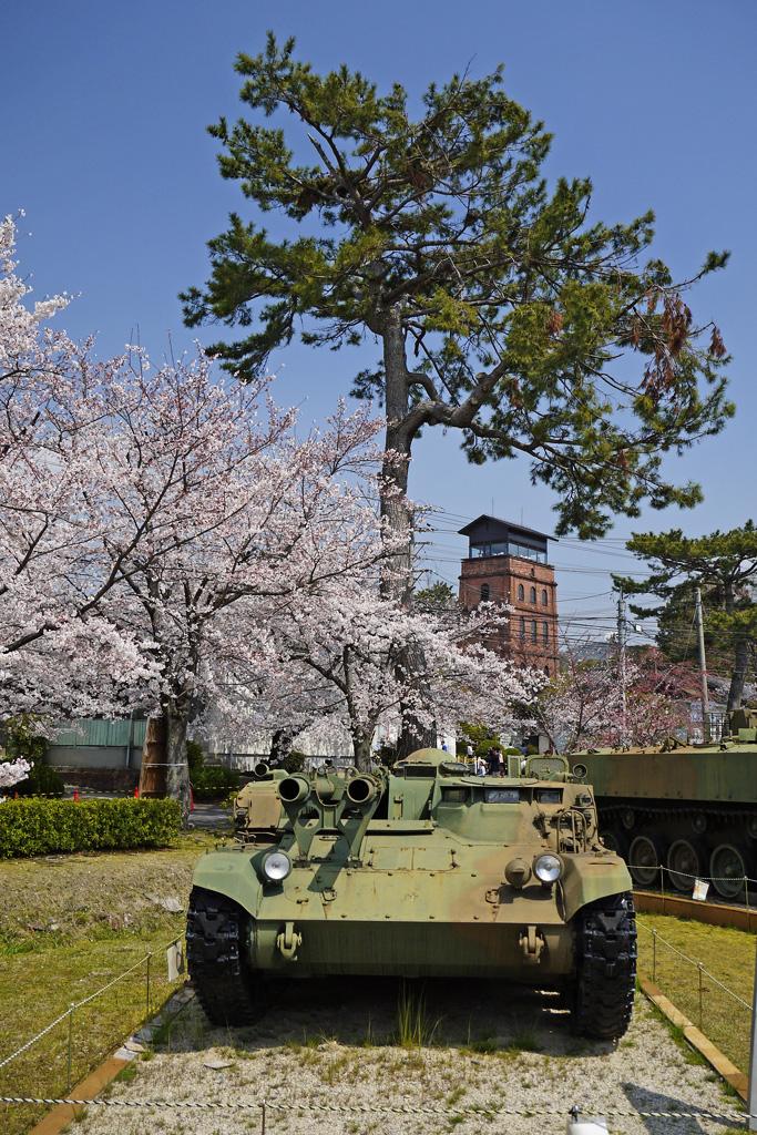 京都 自衛隊宇治駐屯地の桜のフリー写真素材