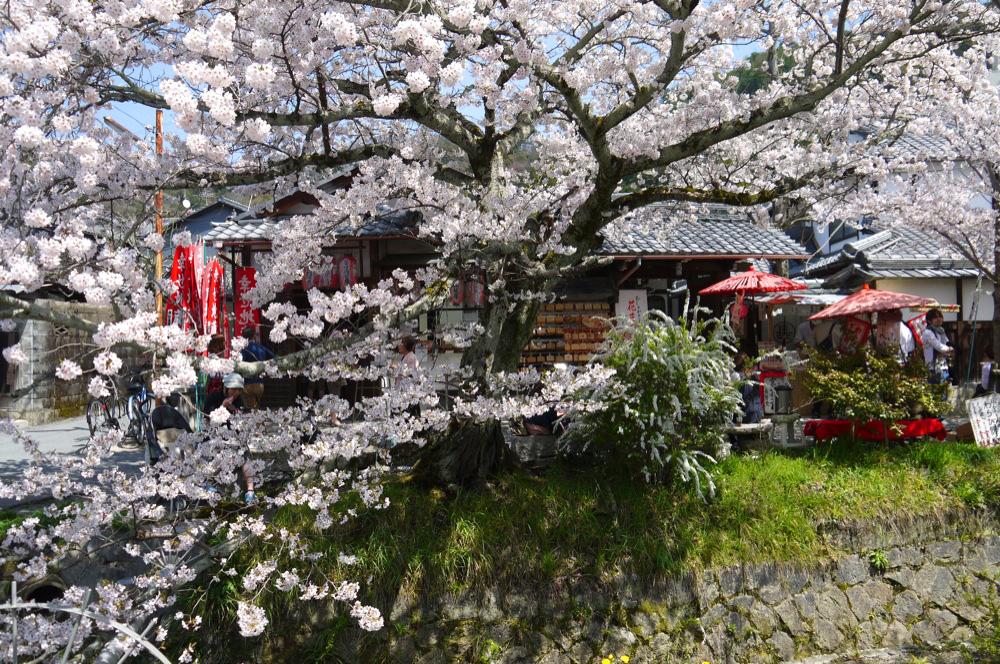 京都 幸せ地蔵の桜
