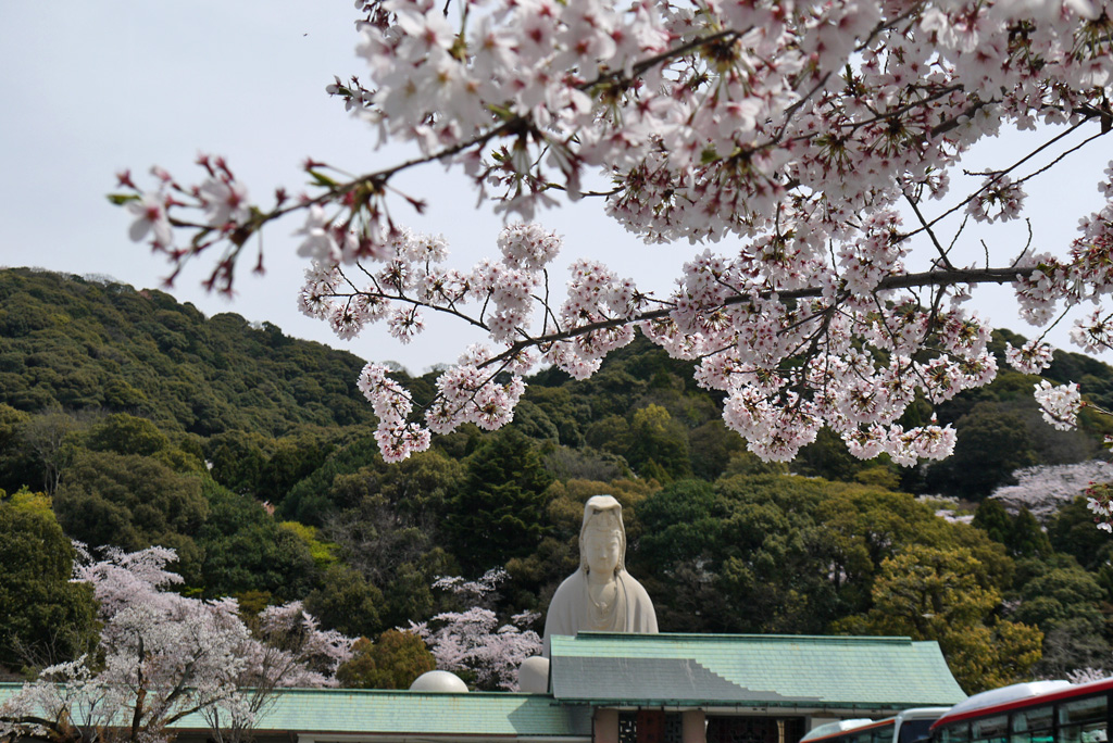 霊山観音の桜