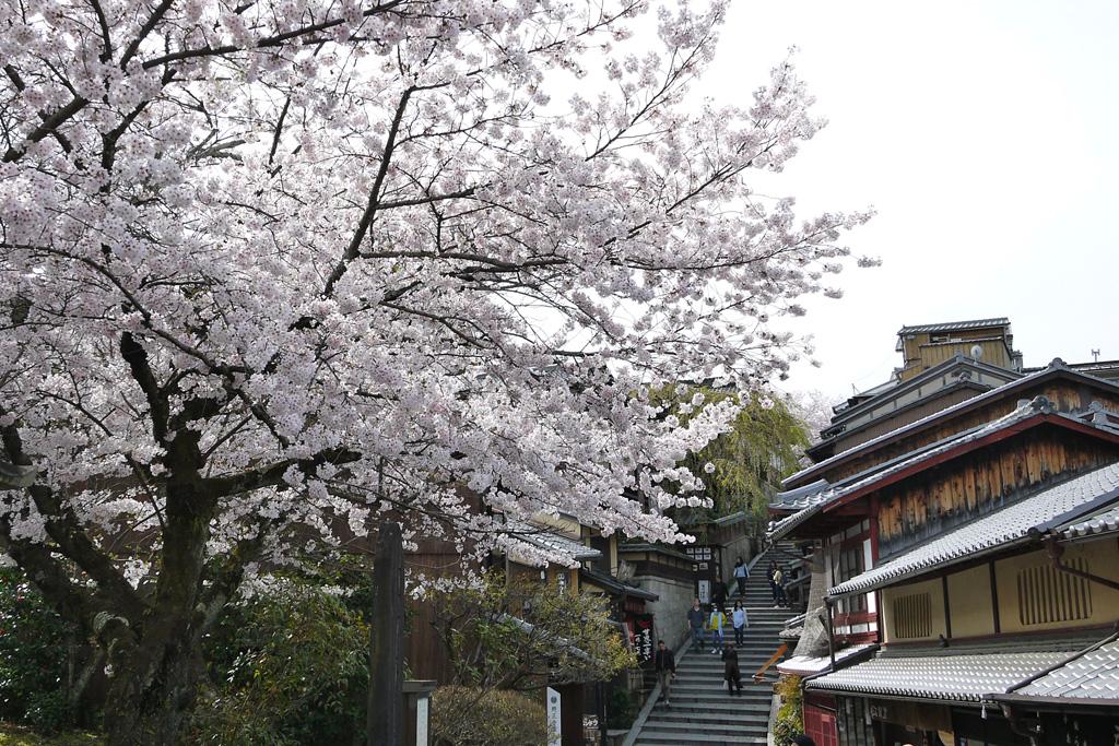 京都 三年坂あけぼの亭の枝垂桜