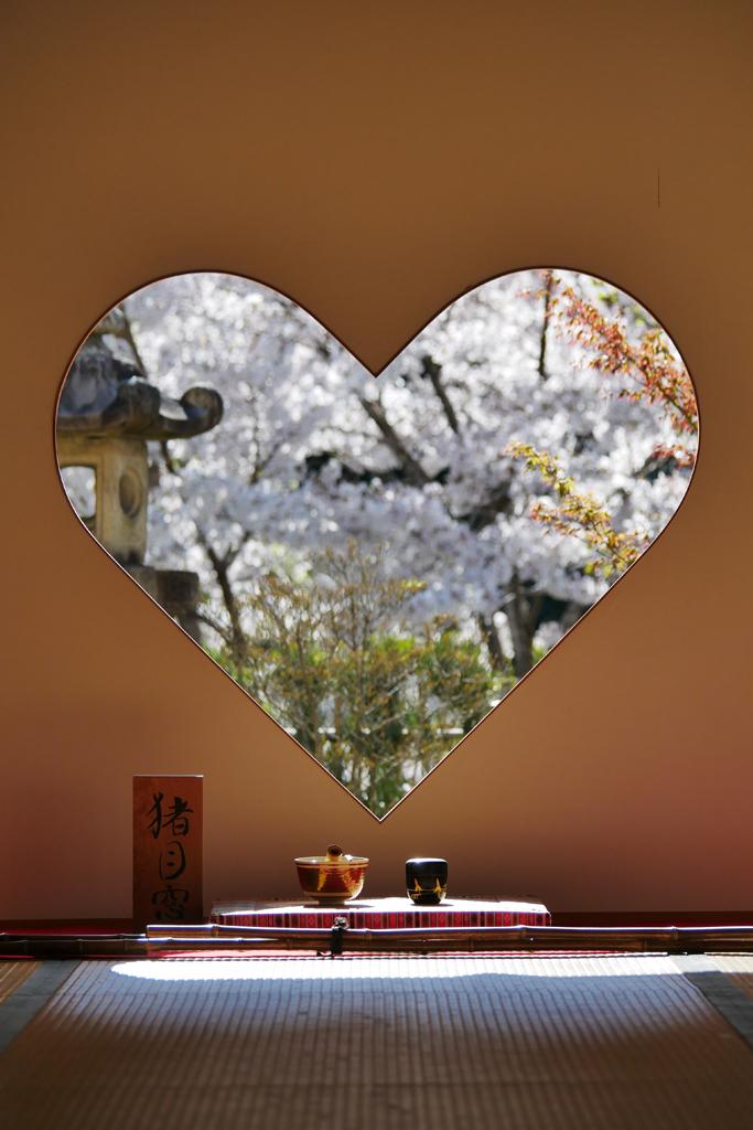 京都 正寿院の桜のフリー写真素材