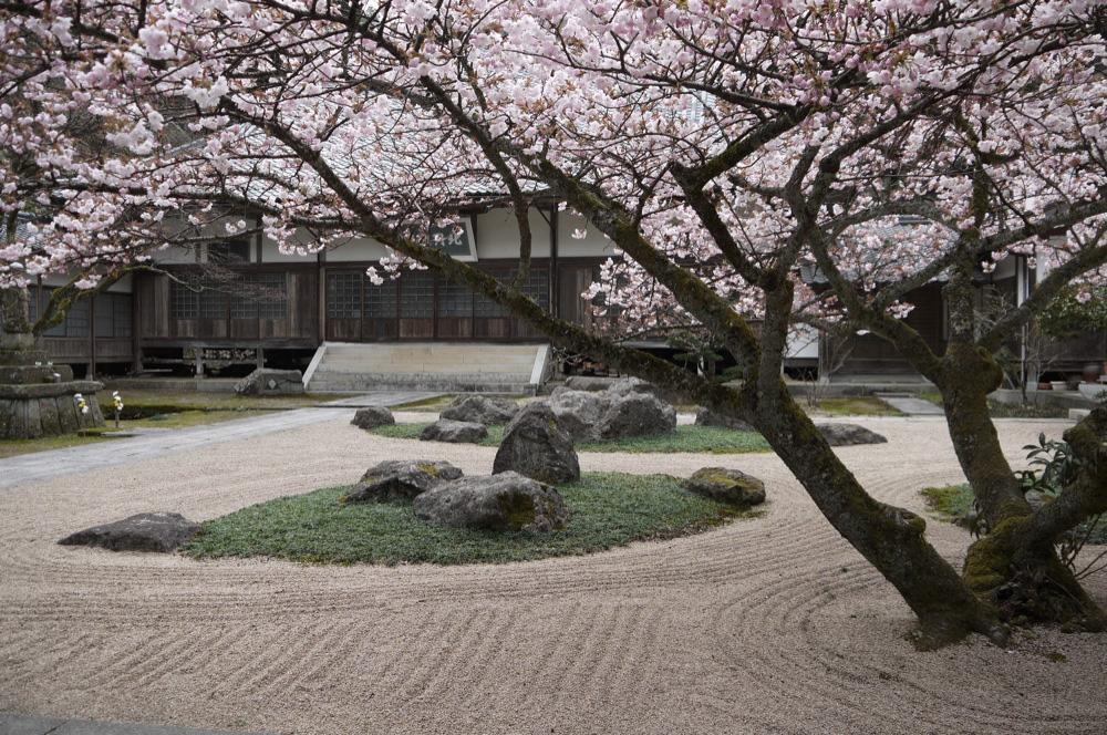 京都 宗雲寺の桜