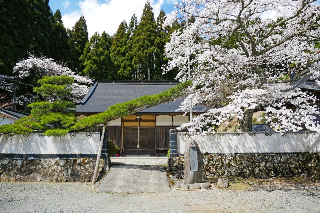 京都 京北 東光寺の桜のフリー写真素材